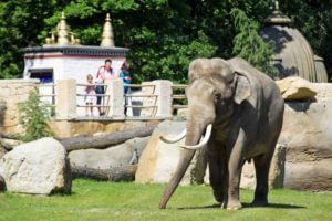 Best things to do in Prague with kids, ZOO